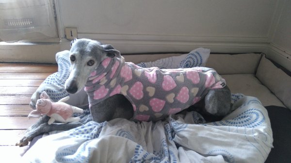 Nouveau pyjama