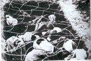 صورة توضح كيف كانت فرنسا تتفن بتعذيب الجزائريين في المحتشدات..