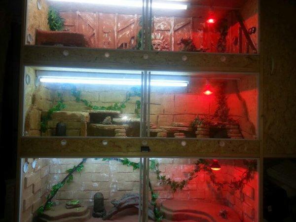 N'ai nouveaux terrariums
