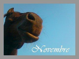 Novembre 2010