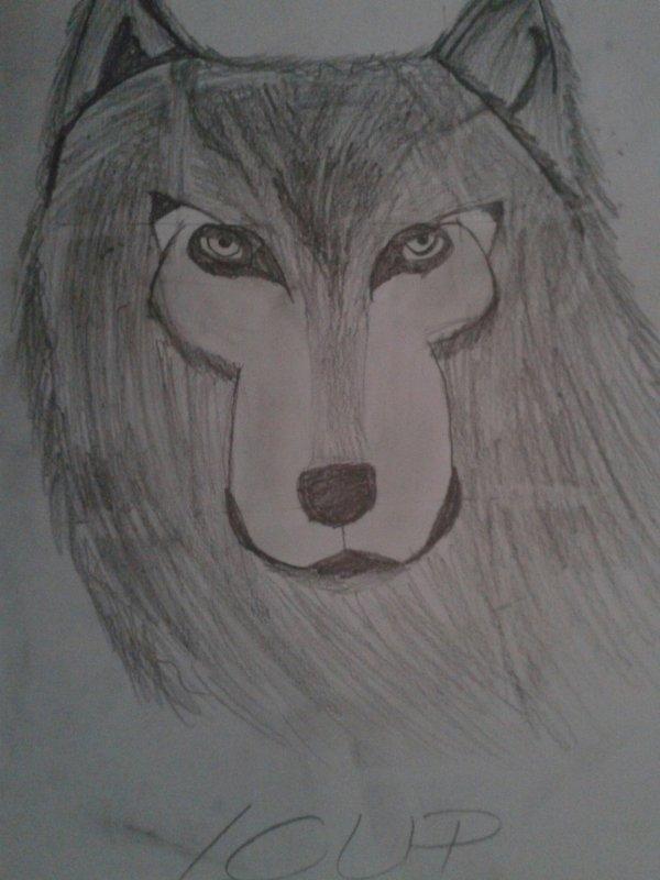 Dessin 1(loup)