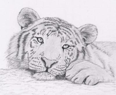 le tigre le dessin - Dessin D Animaux
