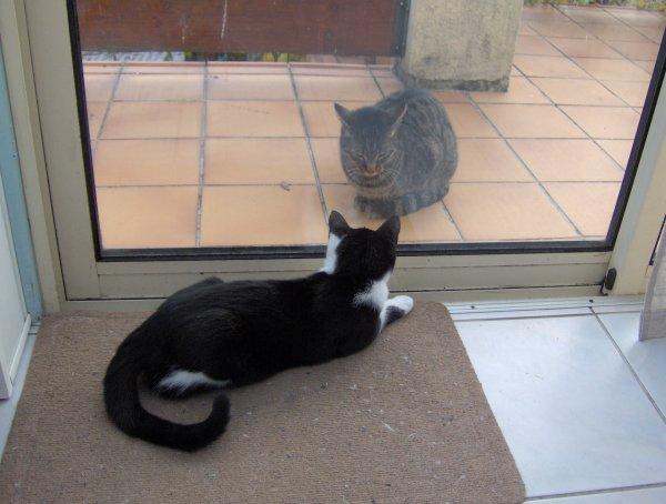 ABBY & PIQUE ASSIETTE  ....commère de terrasse.