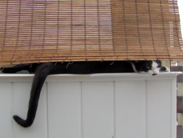 Refermer la  porte & éteignez  derrière  vous . L'utilité  d avoir  un blog ou pas …