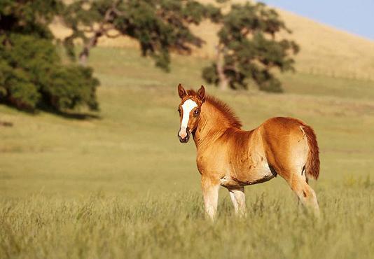 """""""Être heureux à cheval, c'est être entre ciel et terre à une hauteur qui n'existe pas"""" ♥."""