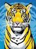 Tiger-animo