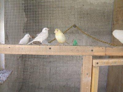 quelque s'oiseaux