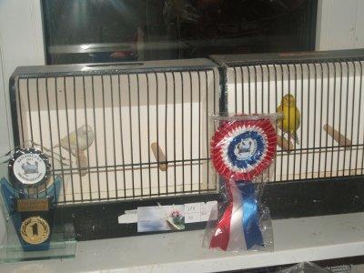 Je félicite mon  frère pour sa prèstation en  canaries au championna de France ;] .