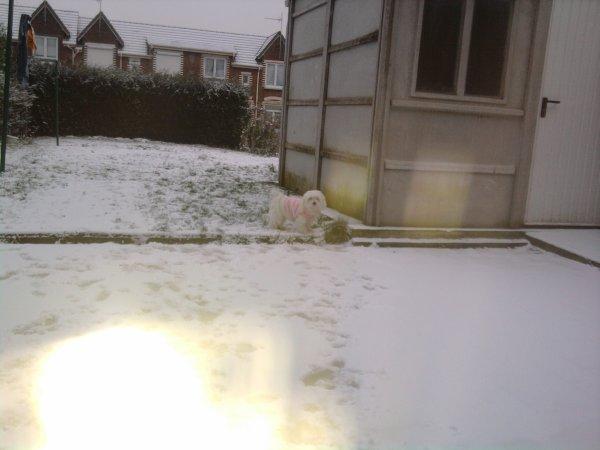 Misty dans la neige ^^