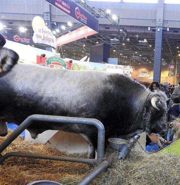 Les animaux de la ferme ....à Paris...