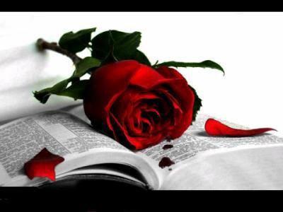 Cette rose pour ma mére