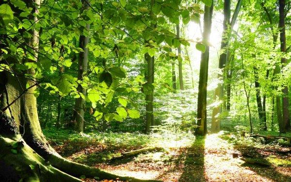 Retour ballade en forêt