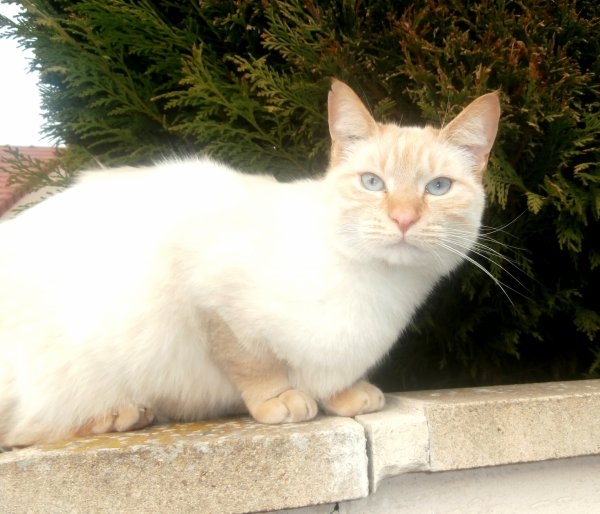 Ce chat est simplement magnifique !