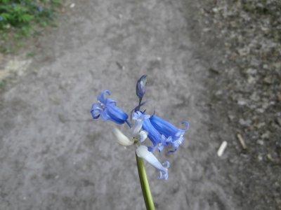 Promenade en amoureux dans la forêt de Saint Sulpice de Favières.