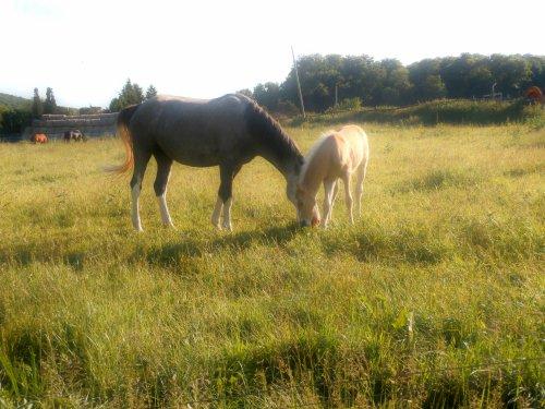 « Les chevaux sont des créatures mystérieuses, ou divines. » { Sagesse indienne ]