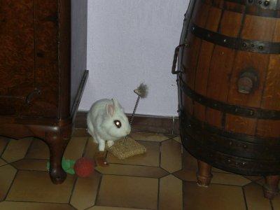 teddy dans le salon