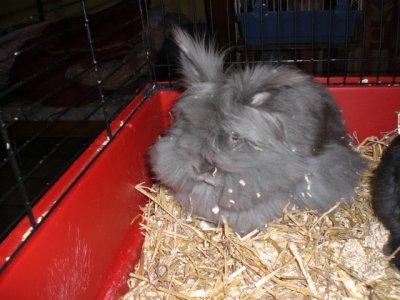 mes deux dernier lapine