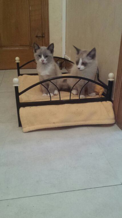 Voici mes 2 nouveaux chats