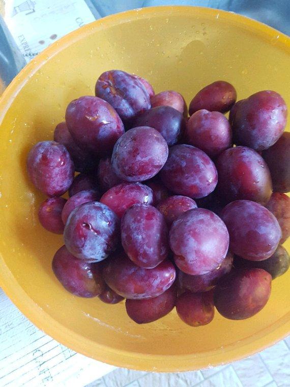 Récoltés de prunes du jardin