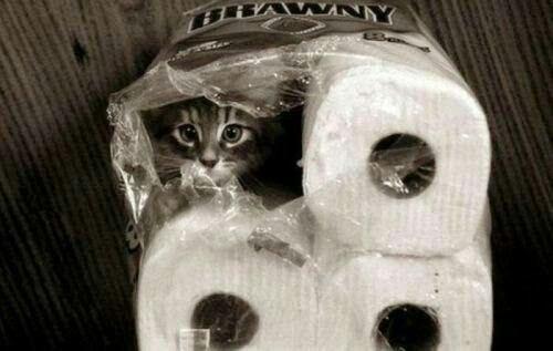 Les meilleurs joueurs de cache cache sont.........