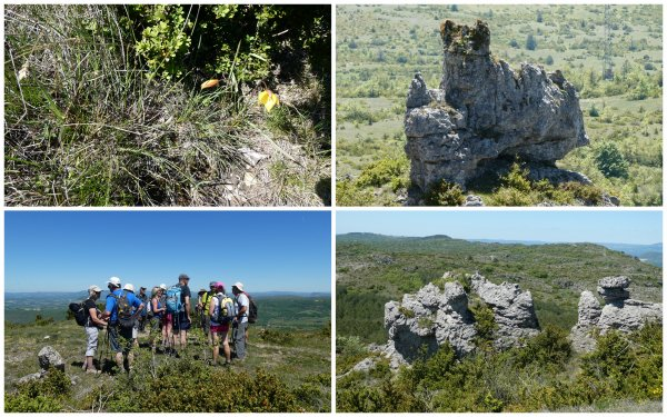 Lapanouze de Cernon : le trail 31/05/2019