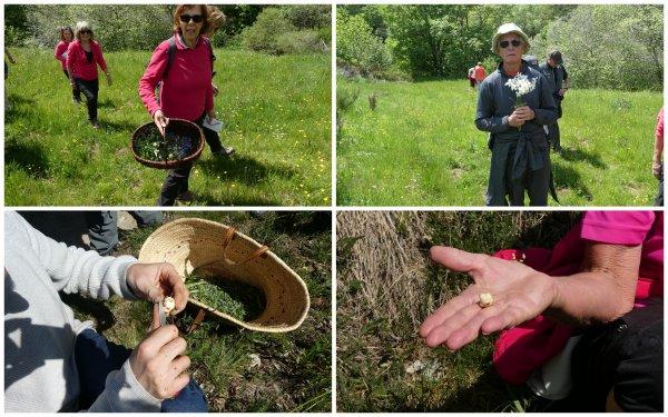 Rando Botanique, Cuisine et Dégustation 05/06/2019