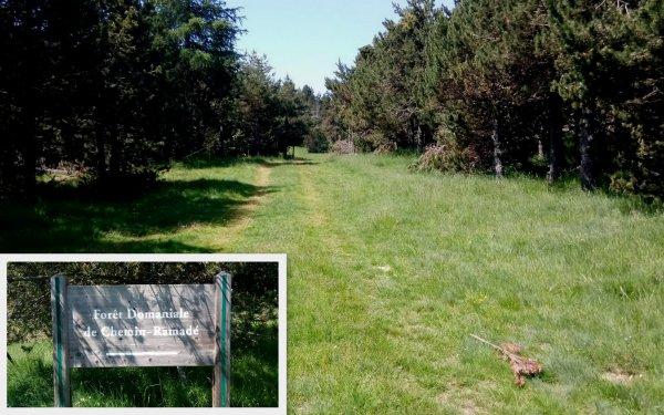Rando forestière sur les hauteurs de la  Llagone 25/06/2020