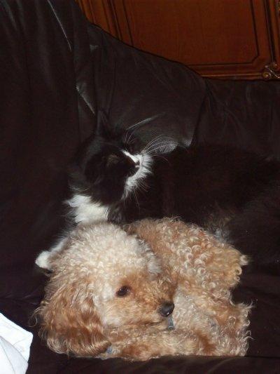 mon chat et mon chien