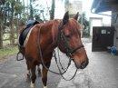 Photo de manou-horse-poney