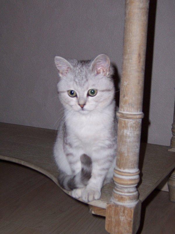 haribo dans sa nouvelle famille un adorable chaton