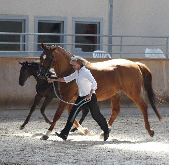 Concours France Dressage  2012