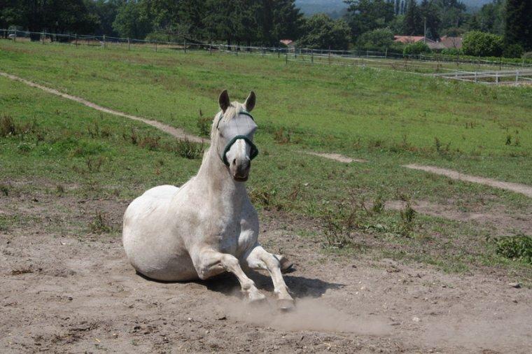 Dessine-moi un cheval