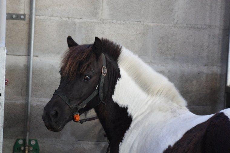 Coupe d'été pour poney:)