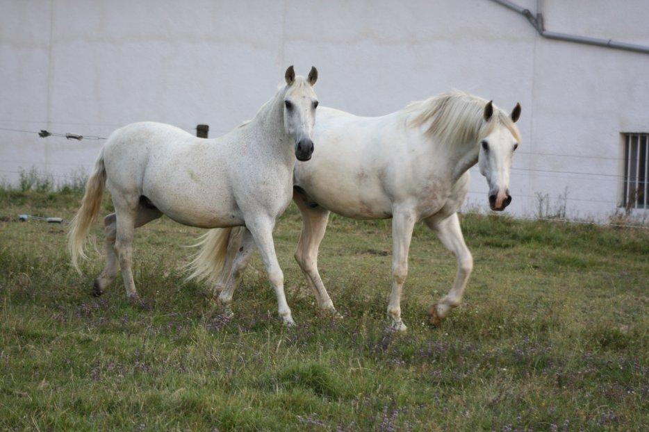 Les chevaux et moi