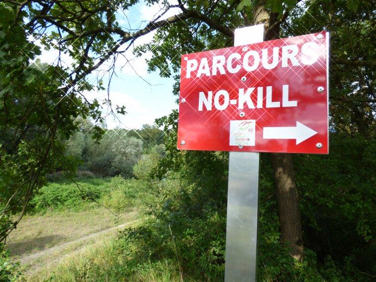 No-kill sur le Vieux-Rhin, la suite...