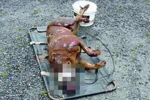 La Louvière: un chien atrocement étranglé et noyé