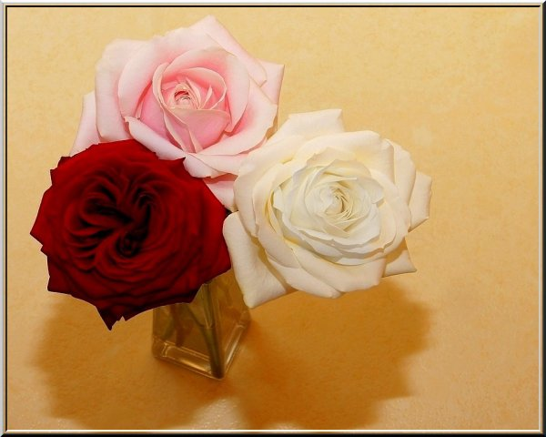 !!!   ROSES  ET  LANGAGE ...   !!!