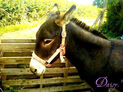 Daisy ; ♥