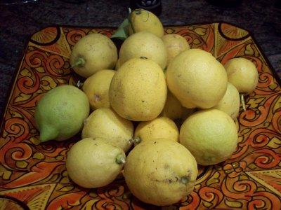 fruits de saison: les citrons