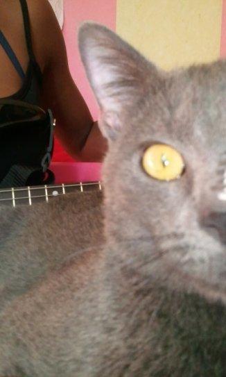 'Weil mein Katzer ein SerialKiller ist'