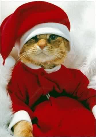 c deja noel pour les chat :-D