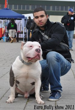 EURO BULLY SHOW HOLLANDE 26/03/11 **Moi Faro & Troy !!**