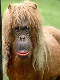 le tii singe transformé en cheval