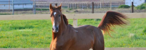Achète ton cheval.