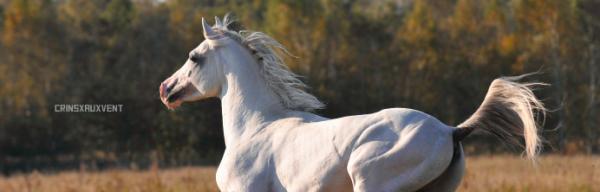 L'équipement de ton cheval.