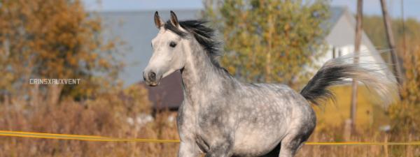 douche ton cheval