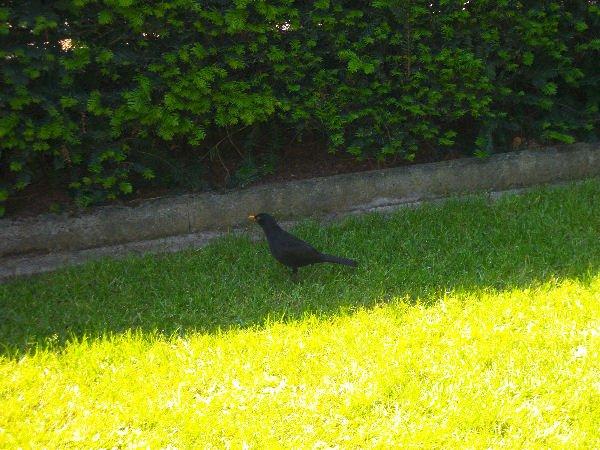 Treffpunkt in meinem Garten: Spatzen, Meisen, Amseln, Tauben .......