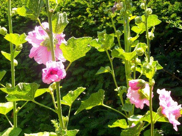 In meinem Garten wird es bunt ........