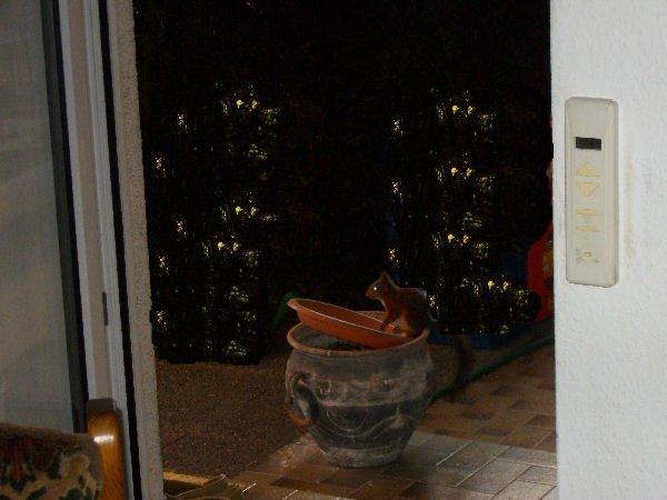 Endlich kommt auch ein Eichhörnchen zum Futternapf der Vögel, aber leider sind die Fotos ein bißchen zu dunkel geworden ....... schade