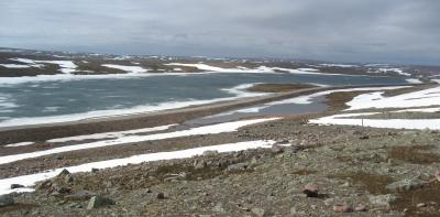 Silent Spring on the Fjell...